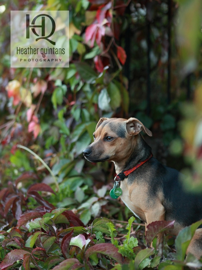 A fall Seattle dog portrait